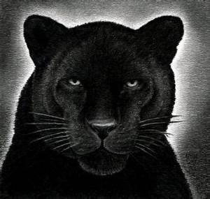 How to Draw a Black Panther, Realistic Panther, Step by ...