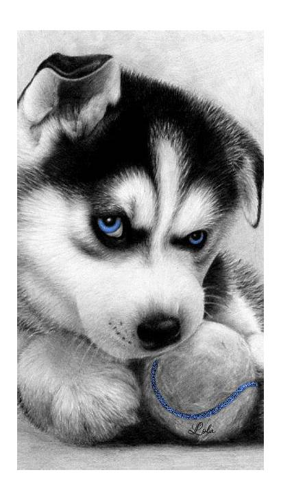 Husky Huskies Puppies Sketches
