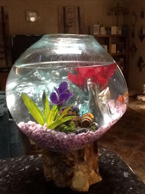 images  fishbowl terrarium  pinterest
