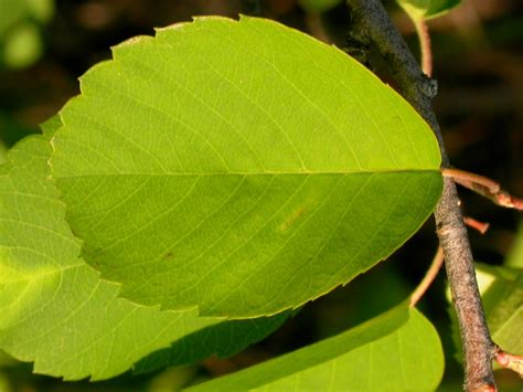 Feuilles Plante; Plant Leaf