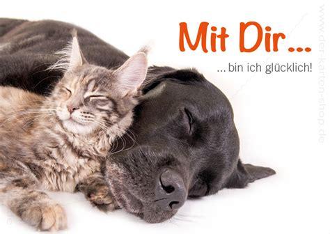 postkarte grusskarte freundschaft hund und katze mit dir