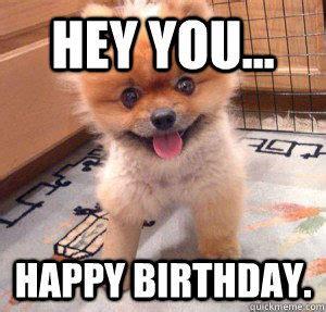 Puppy Birthday Meme - 80 top funny happy birthday memes
