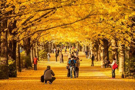 Britzer Garten Herbst by Travelling To Japan In The Autumn Visit Tokyo