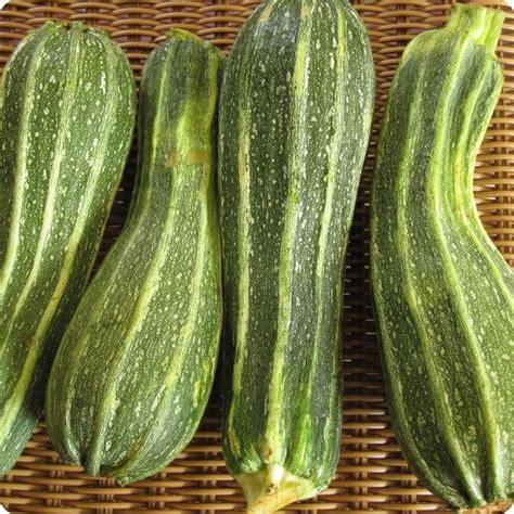 Costata Romanesco Zucchini Seeds - Heirloom Untreated NON ...