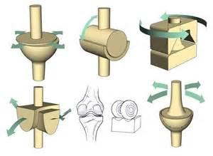 Ball and Socket Hinge Pivot Joint Examples