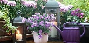 Balkonbepflanzung Im Herbst : bienenfreundliche balkonpflanzen bee careful ~ Markanthonyermac.com Haus und Dekorationen