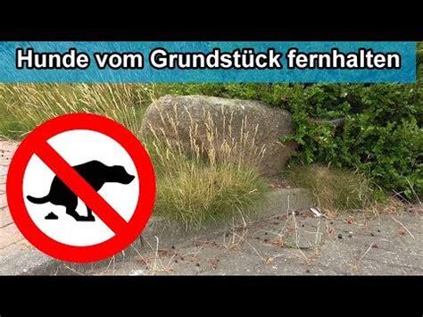 Hunde Vom Grundstück Fernhalten by Hunde Vom Grundst 252 Ck Rasen Blumenbeet Fernhalten