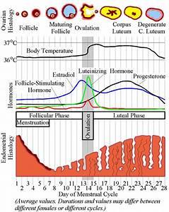 Blog Series Part 2 How Acupuncture Improves Fertility