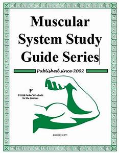 Muscular System Study Guide Series