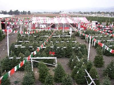 battaglia ranch christmas tree farm christmas tree farm