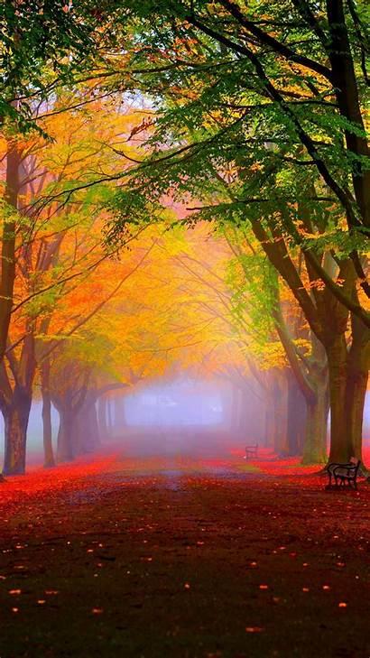 Colorful Fog Trees Fall Foliage Park 1080