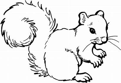 Squirrel Coloring Pages Animals Wildlife Outline Animal