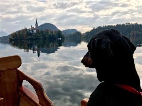 Boat Ride To Dog Island by 9 Dog Friendly Things To Do In Lake Bled Slovenia