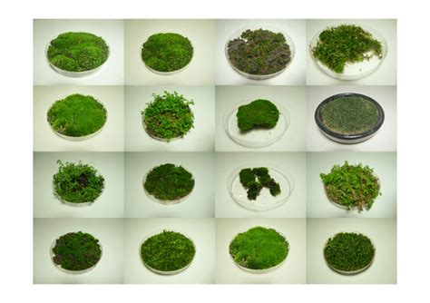 different types of moss moss dish ellvixson