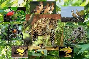 Animal rainforest collage | Amazon Rainforest | Pinterest ...