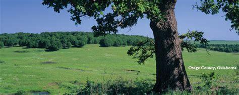cross timbers ecoregion