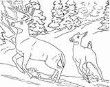 Realistic Coloring Pages Animals Miracle Timeless sketch template