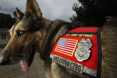 demand  adopting retired military dogs soars  seal