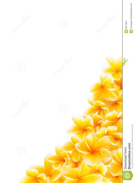 corner border  yellow frangipani flowers stock image