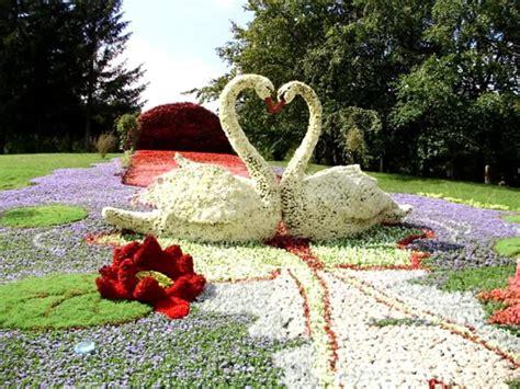 cisnes  paisaje hechos  flores imagen  imagenes