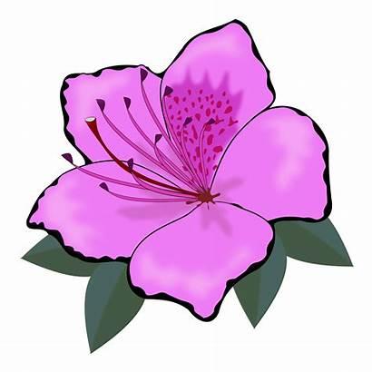 Clipart Flower Flowers Clip Flor Pink Plant