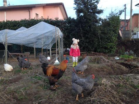 allevamento animali da cortile progetto ecologico orticoltura e allevamento live sett 97