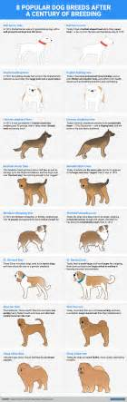 dog breeds looked  years  business insider