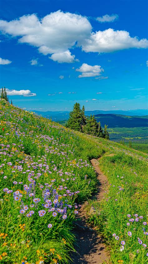 Mountain Pathway Between Grass Field And Flowers In ...