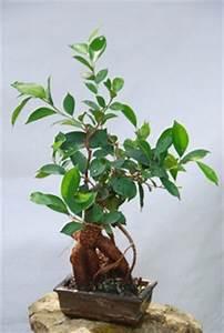 Feng Shui Schlafzimmer Pflanzen : zimmerpflanzen nach feng shui ratgeber ~ Bigdaddyawards.com Haus und Dekorationen