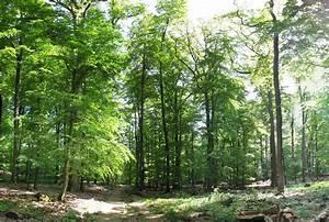 Bilder Vom Wald : naturpark rhein taunus ~ Yasmunasinghe.com Haus und Dekorationen