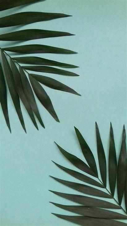 Leaf Aesthetic Leaves Iphone Wallpapers Phone Pantalla