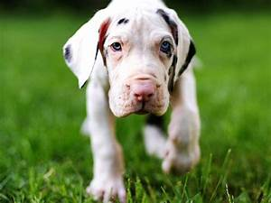 your puppy pictures