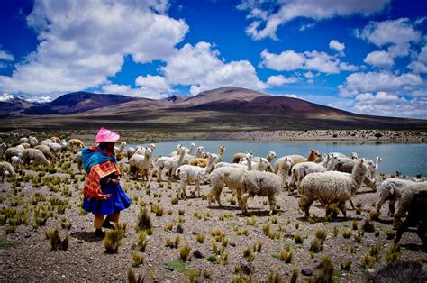 le si鑒e de volunteer and intern in peru projects abroad