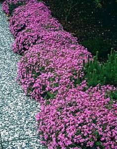 Balkonkästen Bepflanzen Beispiele : les 480 meilleures images du tableau pflanzen sur ~ Lizthompson.info Haus und Dekorationen