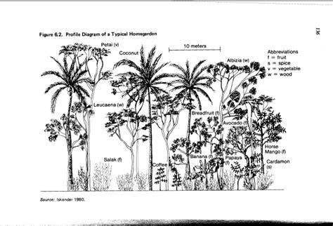 agroforestry  west java article anthropogen