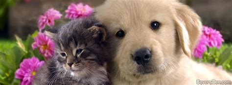 pets animals facebook covers facebook profile covers