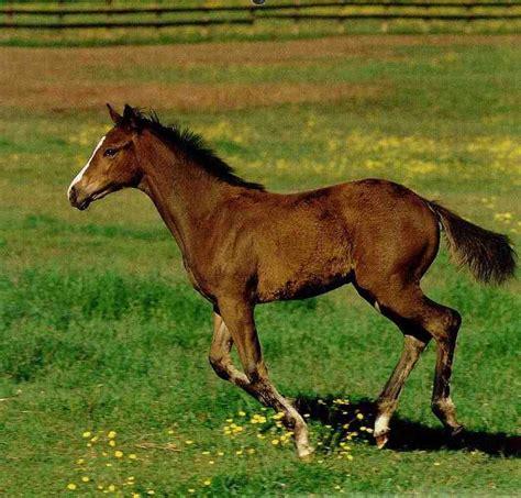 animal domestic horse equus foal caballus running display