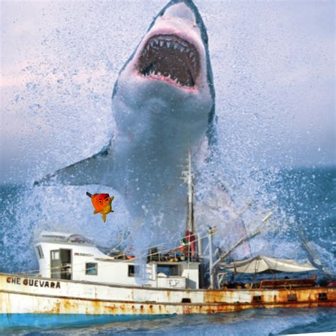 Sinking Boat Surrounded By Sharks by Imagine You Are In A Sinking Rowboat Surrounded By Sharks