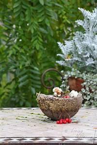 Exotische Früchte Im Eigenen Garten : fr chte samen moos november im garten living green ~ Lizthompson.info Haus und Dekorationen