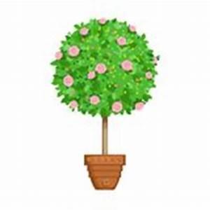 Baum Im Topf : bl hender baum im topf stock abbildung bild 53436204 ~ Michelbontemps.com Haus und Dekorationen