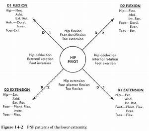 Image Result For Pnf Patterns