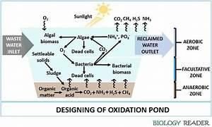 What Is Oxidation Pond  Definition  Mechanism  U0026 Process
