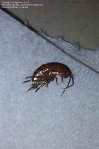 Bugs commonly found in bathrooms 28 images bugs for Bugs found in the bathroom