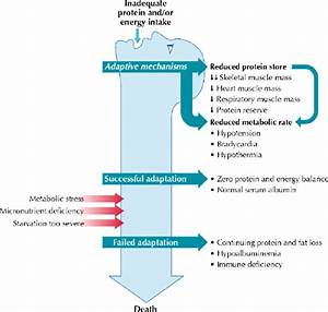 Protein Energy Malnutrition Clinical Nutrition 1 Protein Energy Malnutrition In The