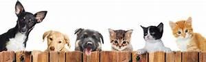 Flöhe Hund Mensch : parasiten bei hunden katzen pferden und menschen ~ Yasmunasinghe.com Haus und Dekorationen