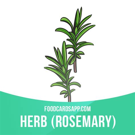 Rosemary Herb Diagram by 17 Best Ideas About Dictionary On Name