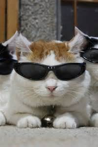 cool for cats i m cool cat cats picture