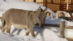Winterurlaub In Sdtirol Am Bauernhof Roter Hahn