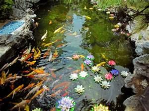 Goldfisch Haltung Im Teich : teichfische gartenteichfische haltung und berwinterung ~ A.2002-acura-tl-radio.info Haus und Dekorationen