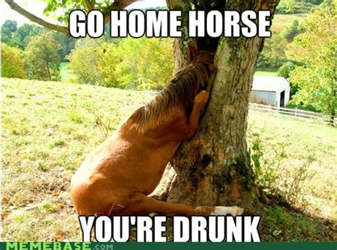 Horse Memes - world s prettiest horse 2012 the world s most beautiful horse page 2 tigerdroppings com